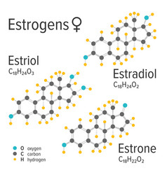 estrogens female hormones chemical vector image