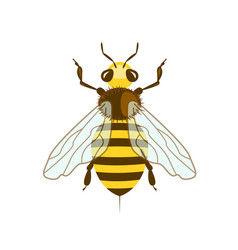 honey bee in flat design vector image