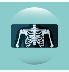 human anatomy design vector image