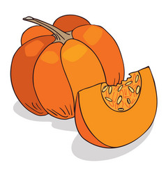 Isolate ripe squash or pumpkin vector