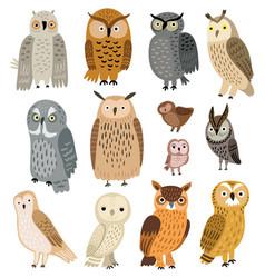 owls set different owls vector image