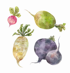 set of root vegetables watercolor drawing vector image