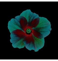 Fantastic Hibiscus Head vector image vector image