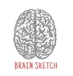 Vintage sketch of human brain for creative design vector image
