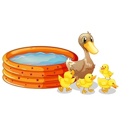 An inflatable pool at the back of the five ducks vector