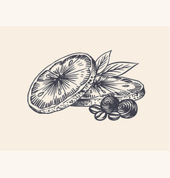 orange slices summer fruit engraved hand drawn vector image