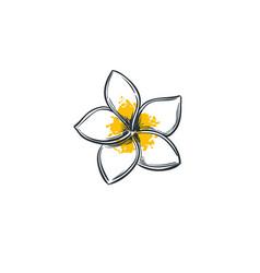 Plumeria tropical flower vector