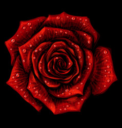 red rose artistic color image a red rose vector image