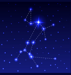 The constellation of the big dog vector