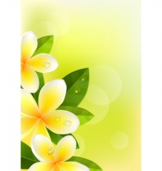 tropic background with frangipani vector image