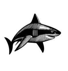 swimming shark ink drawing vector image vector image