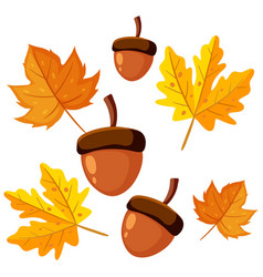 Acorns and maple leaves decor for autumn vector