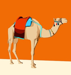 Camel with a saddle vector