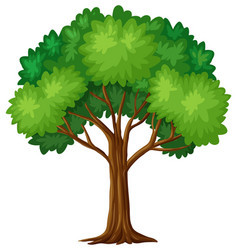 Green tree on white background vector