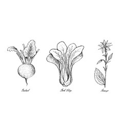 Hand drawn of beetroot bok choy and borage vector