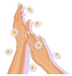 Hands with chamomile vector
