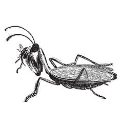 Mantis vintage vector