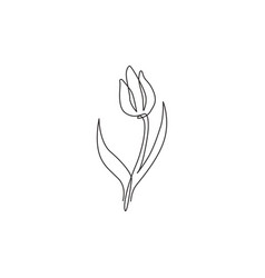 one single line drawing beauty fresh tulip vector image