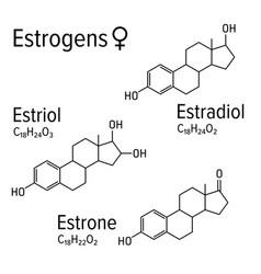 Estrogens female hormones chemical vector