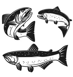 set of salmon fish icons isolated on white vector image