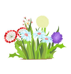set of wild forest and garden flowers spring vector image