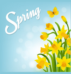 spring card with narcissus vector image