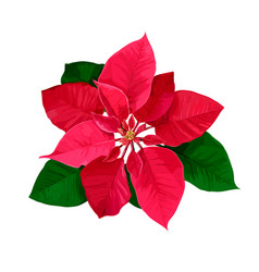 Christmas star hand drawn poinsettia flower vector
