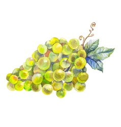 grapes watercolor prewew vector image
