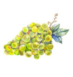 Grapes watercolor prewew vector