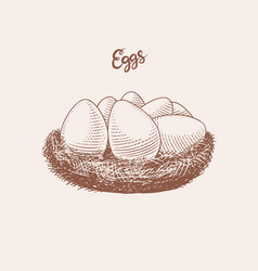Nest eggs farm product engraved hand drawn vector