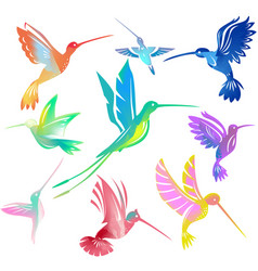Set colorful flying hummingbirds vector