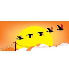 Silhouette flying birds at sunset vector image