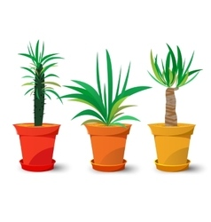 three pots with plants vector image
