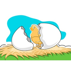 chick with broken egg vector image