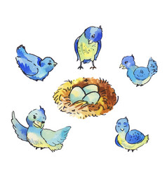 Set of cute blue birds around the nest with eggs vector
