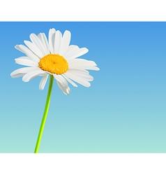 Flower nature background Chamomile bloom vector image