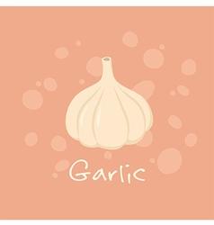 Garlic Vegetable vector image