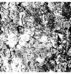 bark of birch in the cracks texture vector image vector image