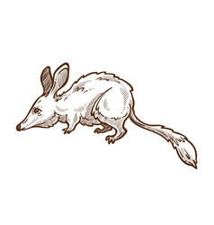 Australian mouse great bilisolated sketch vector