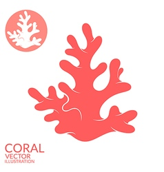 Coral vector image
