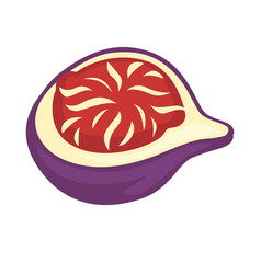Fig fruit or sweet granadilla or grenadia isolated vector