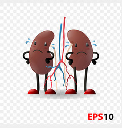 kidneys human internal organ characters vector image