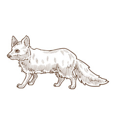 Forest animal fox isolated sketch wild vector