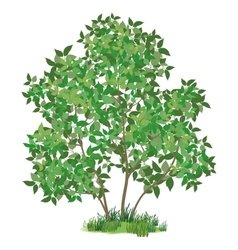 Lilac tree and green grass vector image
