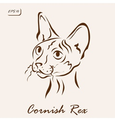 Cornish rex vector
