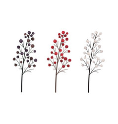 berries on a branch botanical vector image