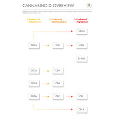 cannabinoid overview vertical business vector image