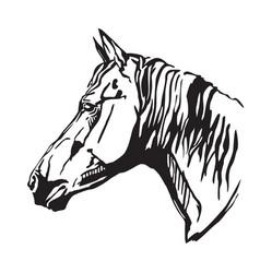 Decorative portrait horse-2 vector
