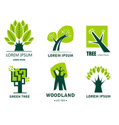 environment and ecology woodland and green tree vector image