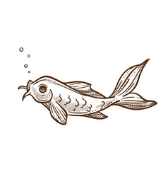 fish breathing out bubbles catfish or sheatfish vector image